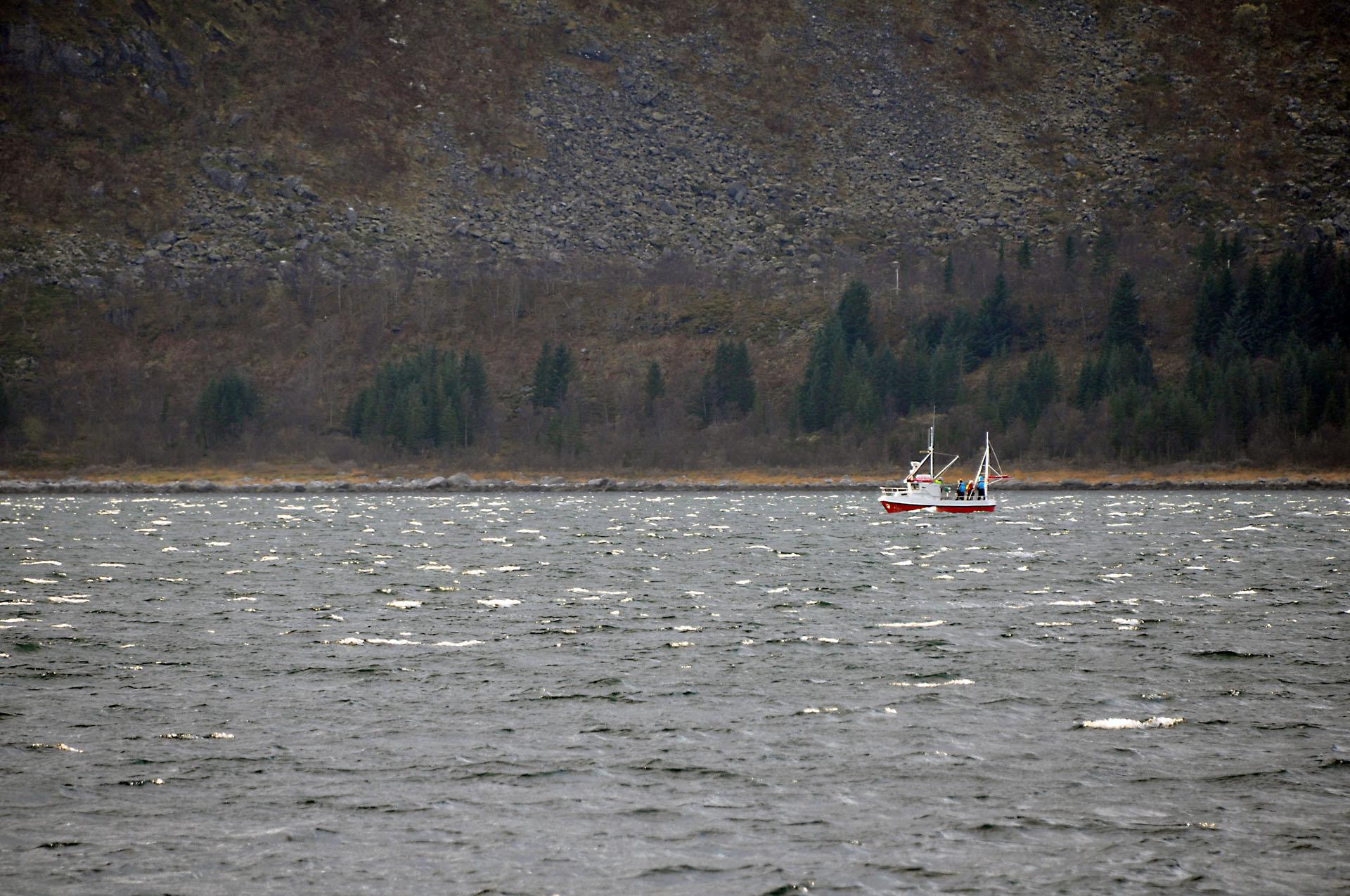 Steinfjord 09