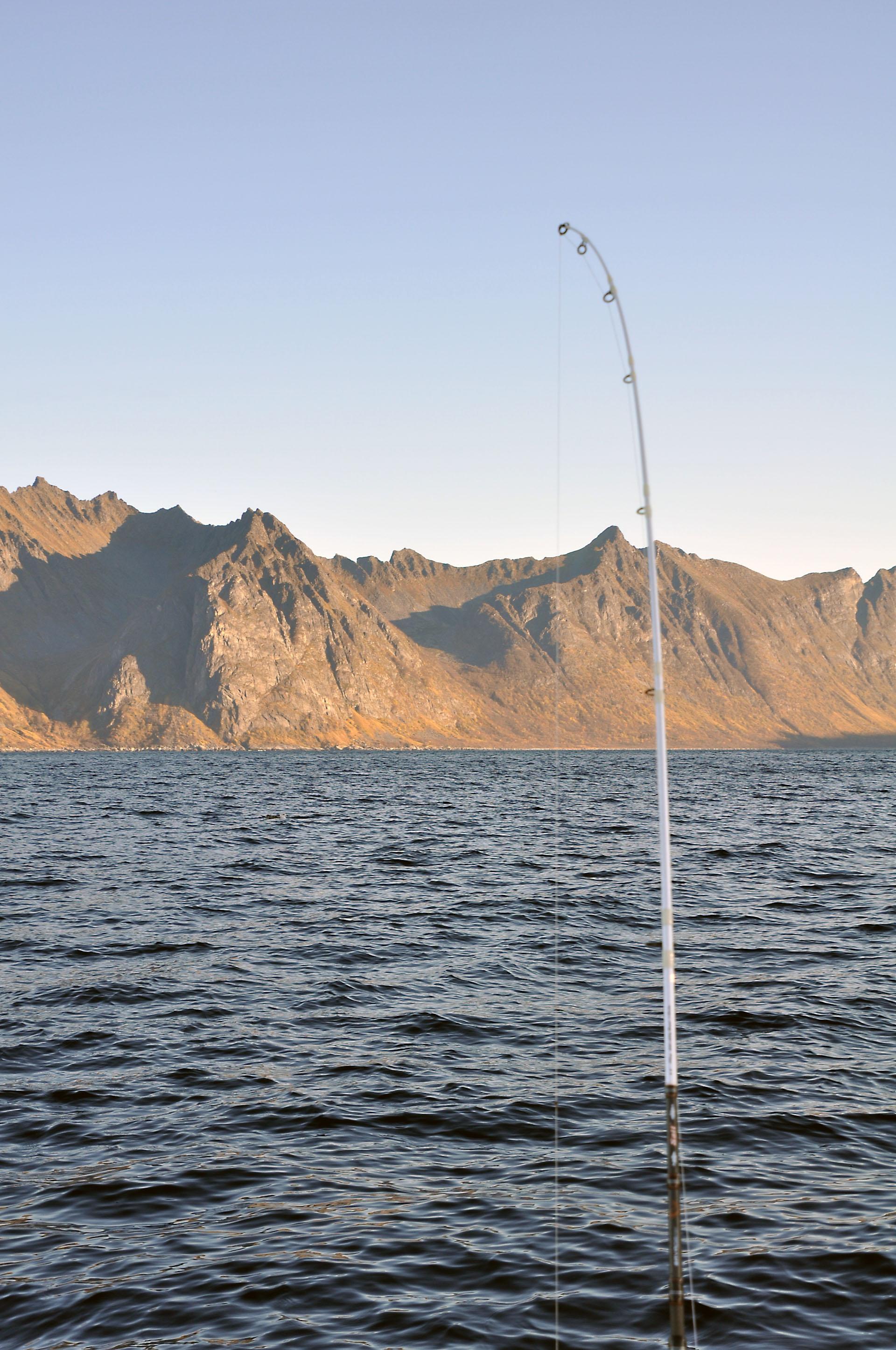 Steinfjord 16