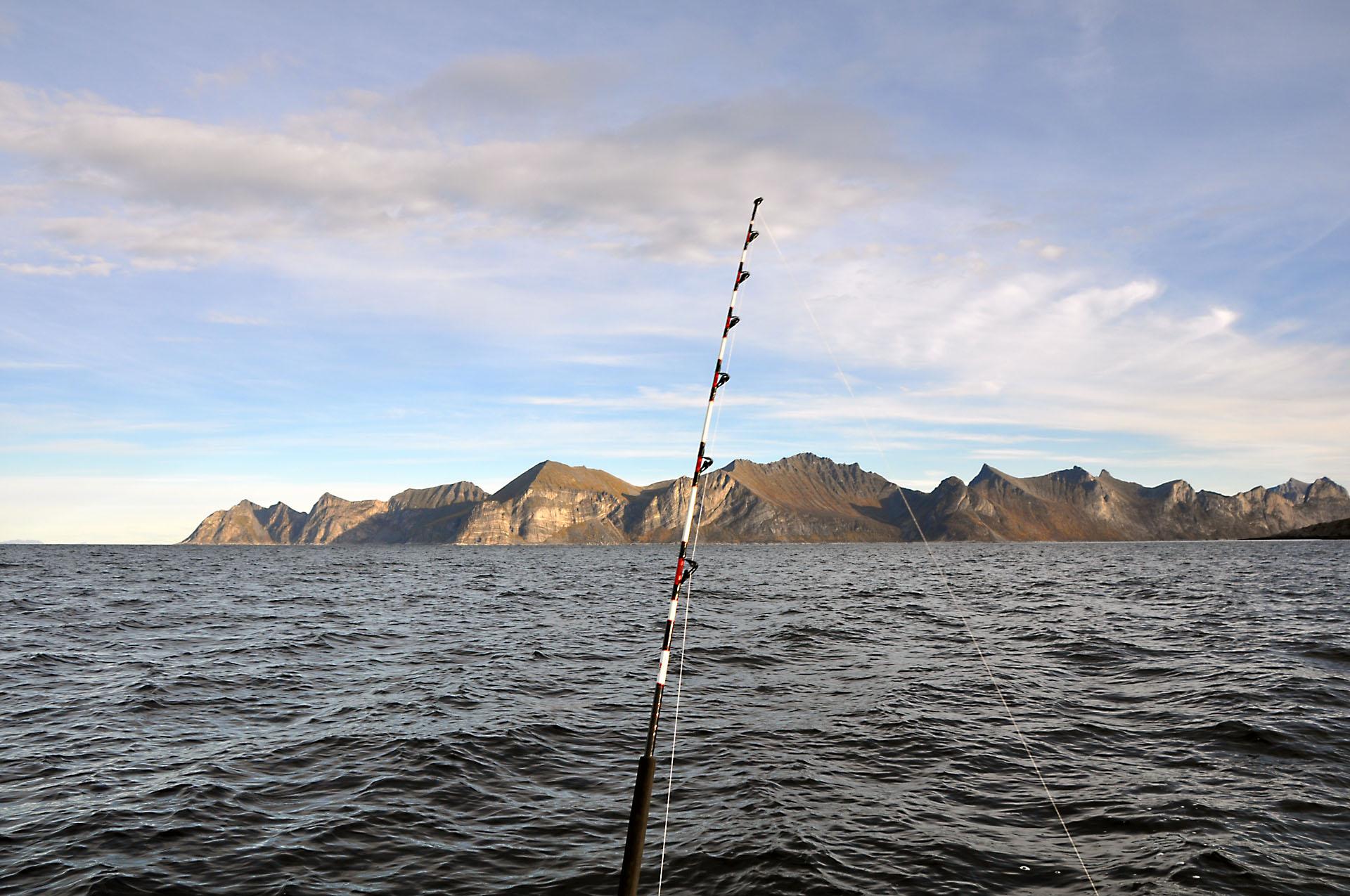 Steinfjord 29