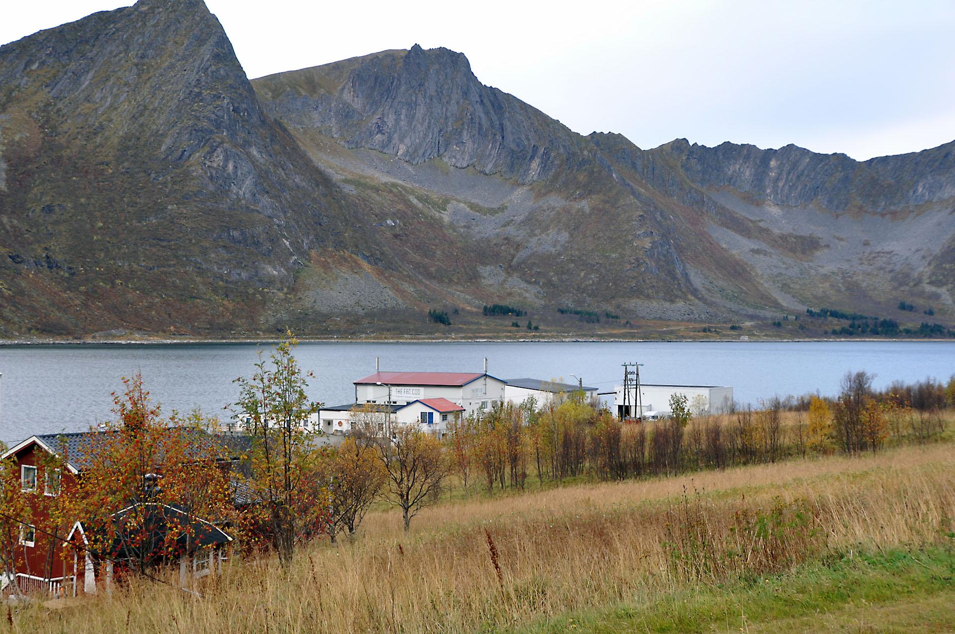 Steinfjord 38