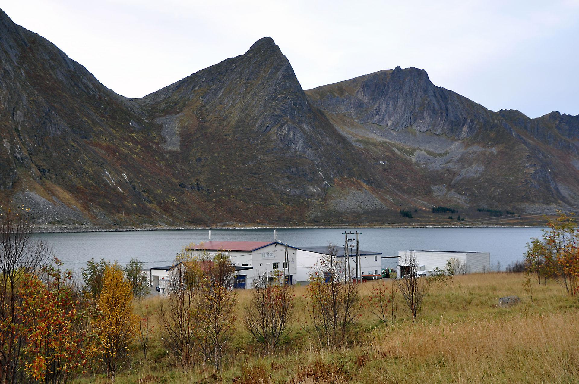 Steinfjord 39
