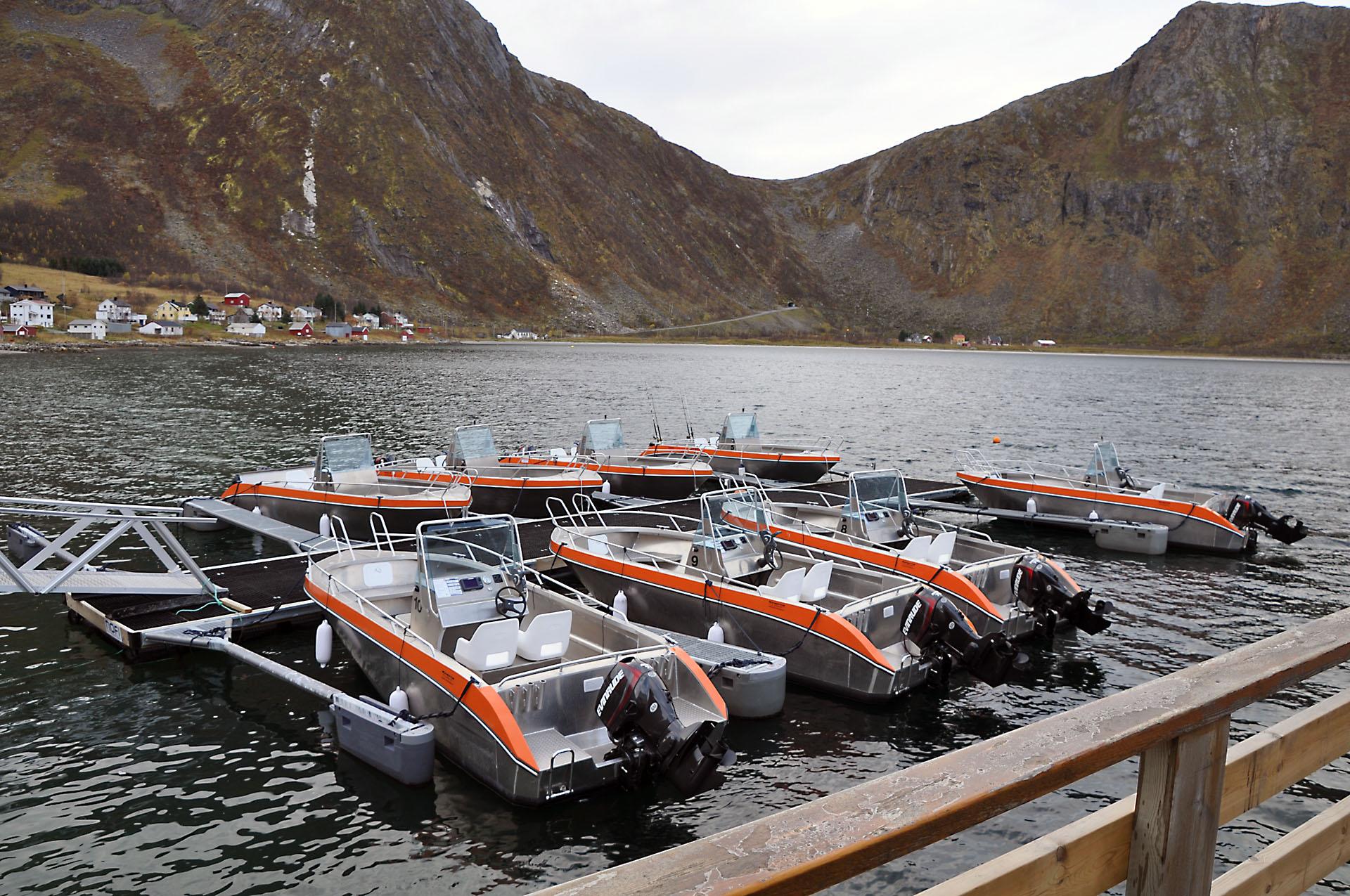 Steinfjord 50